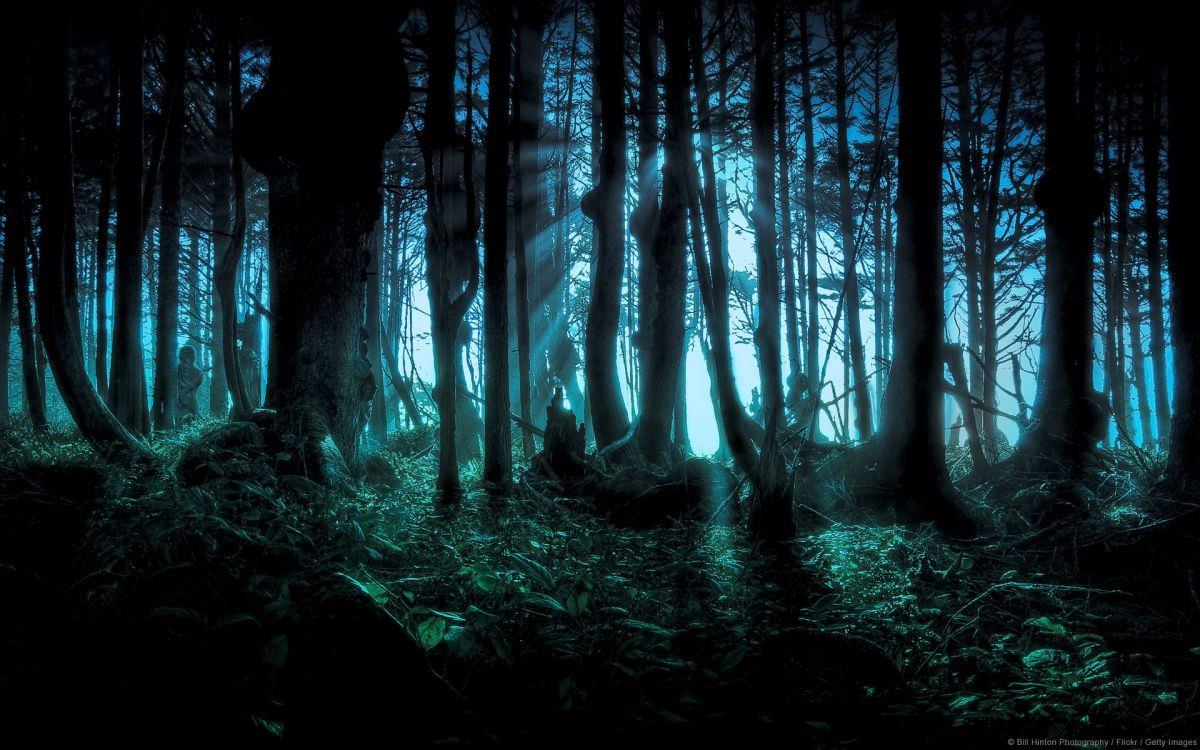 forest-hidden-night-1920x1200