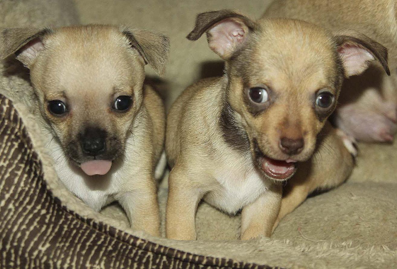 puppies002