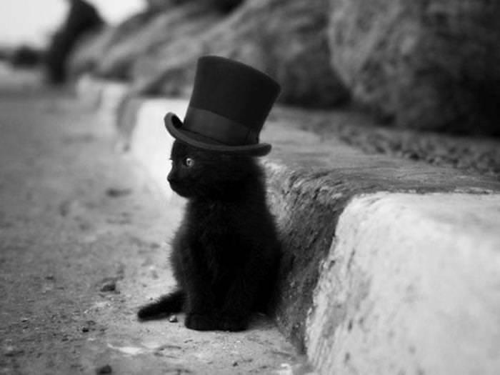 63b352ee7318 Γάτες για φιλόδοξους ανθρώπους
