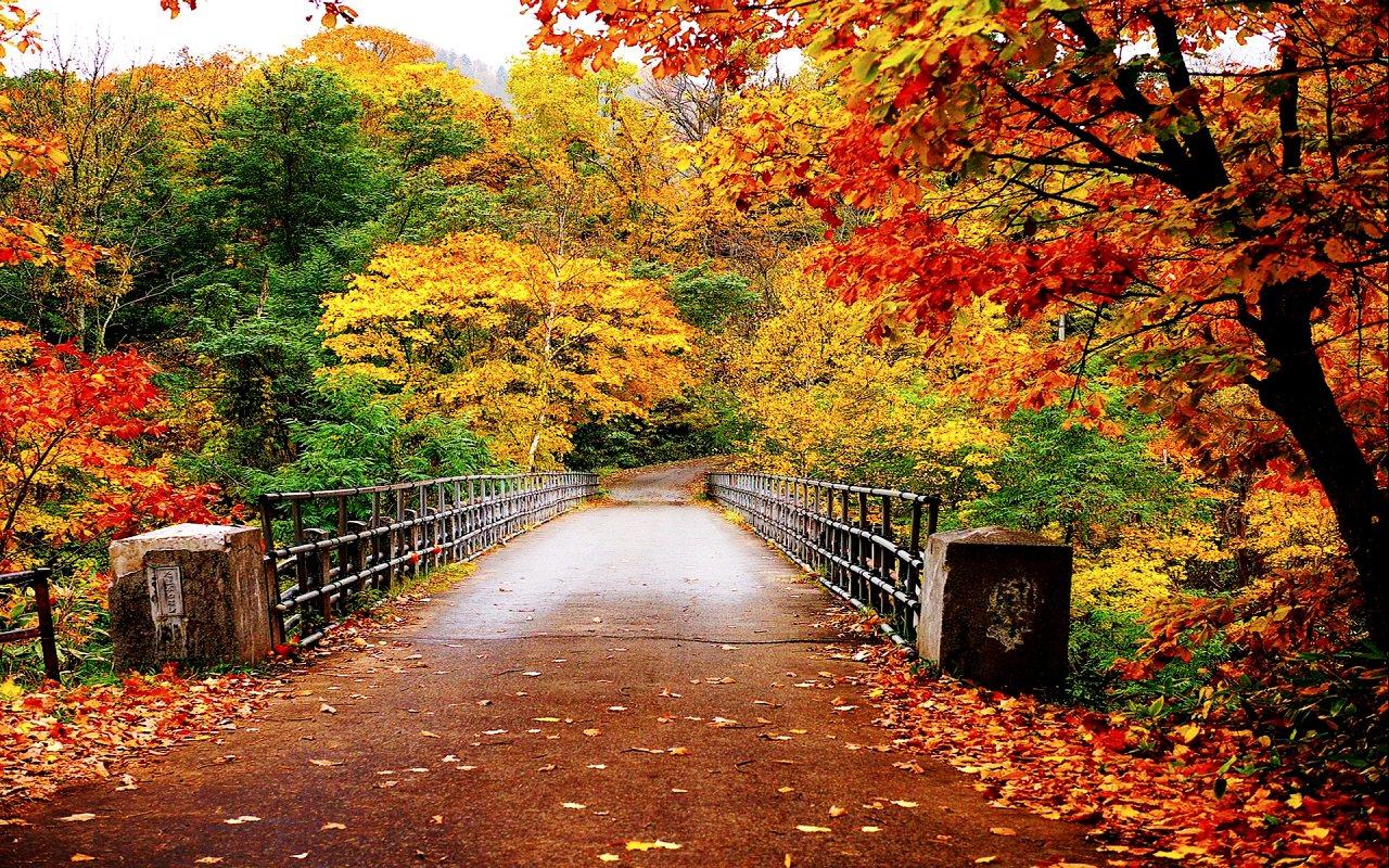 Autumn-Wallpaper-autumn-35867750-1280-800