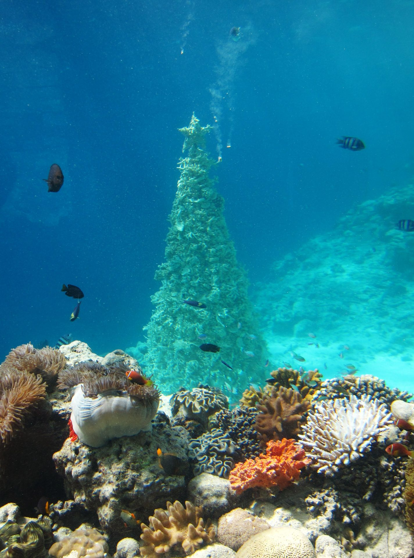 maldibes
