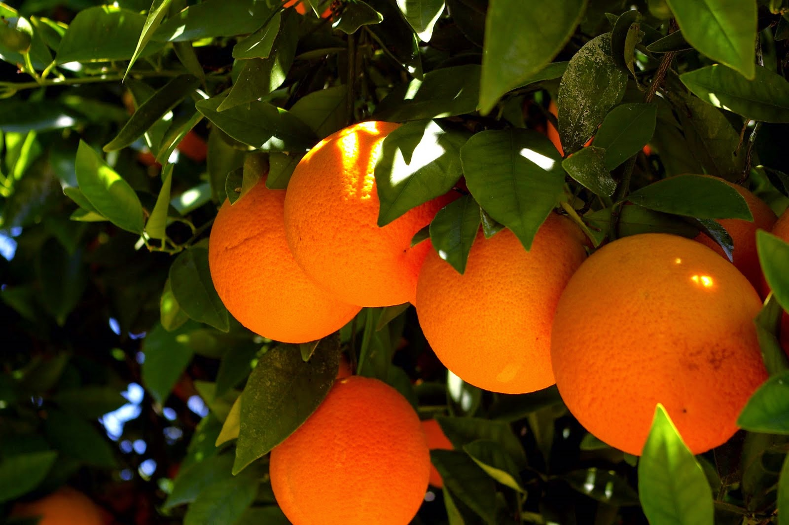 meriki-tropoi-gia-na-xrisimopoiisis-ta-portokalia-gia-to-derma-sou