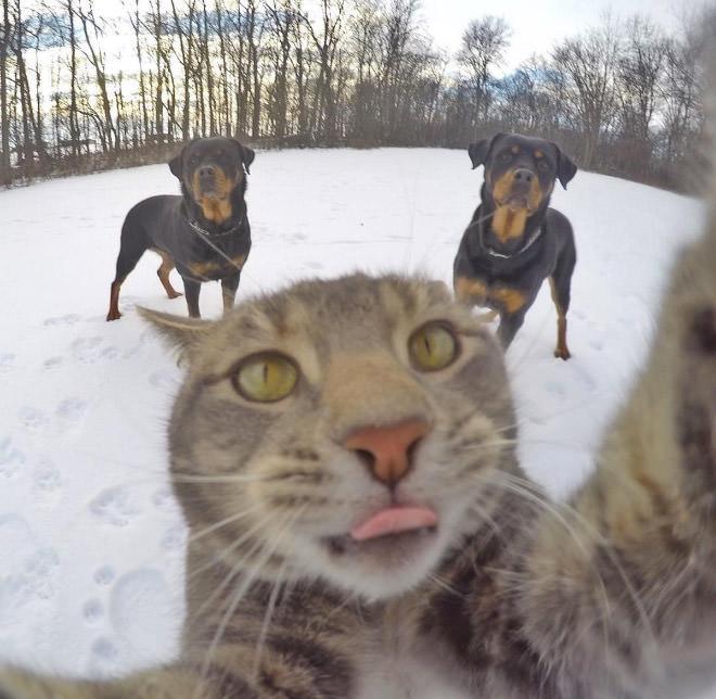 selfie-dogs