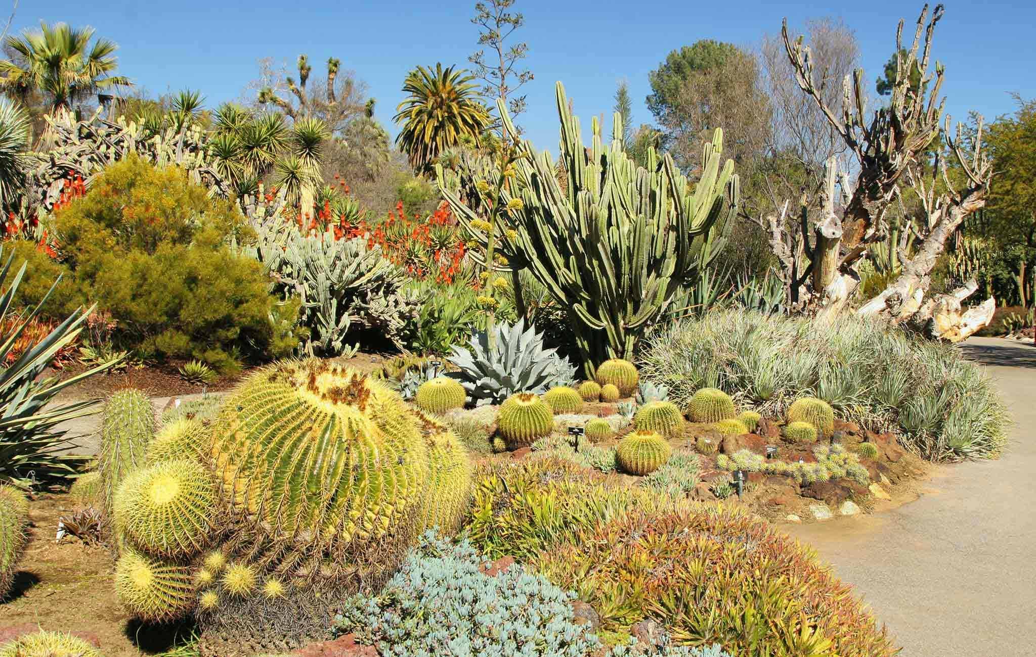 Desert-Botanical-Garden-Cactus-Photo